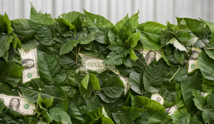 A green hedge made with poison ivy and American dollars