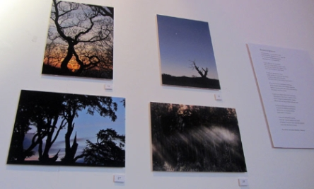 Sounds of Shropshire exhibition at the Hive